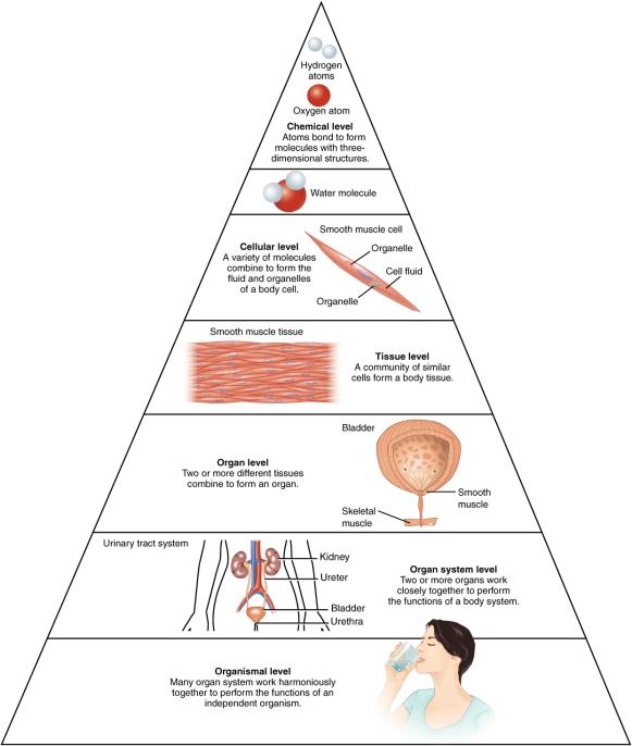 Levels of Body.jpg